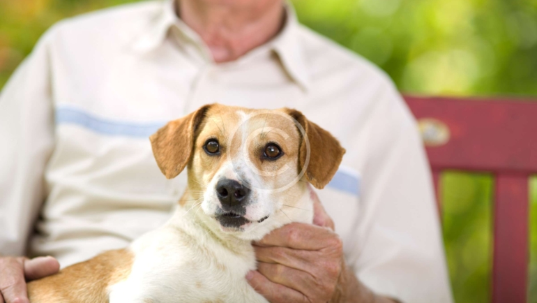Seniors and pets – a great relationship